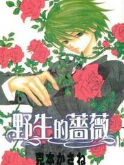 野生的薔薇